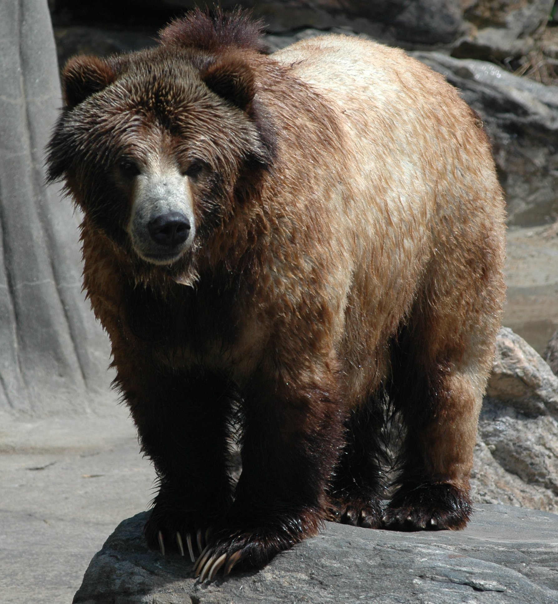 http://www1.cs.columbia.edu/~sedwards/photos/kyle200604/20060412-7108%20Grizzly%20bear.jpg
